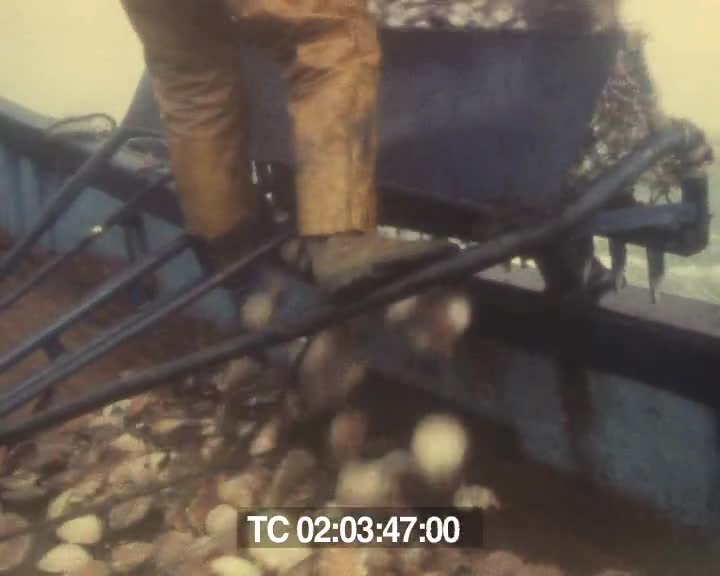Pêche à la coquille (rushes) | Rolland Savidan