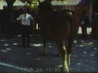 Concours du cheval breton